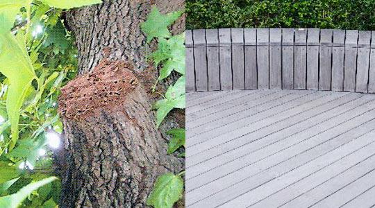 樹木・木製品(杭やウッドデッキなど)