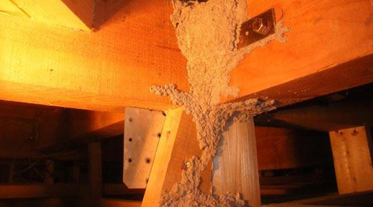 一階の天井、屋根裏の被害